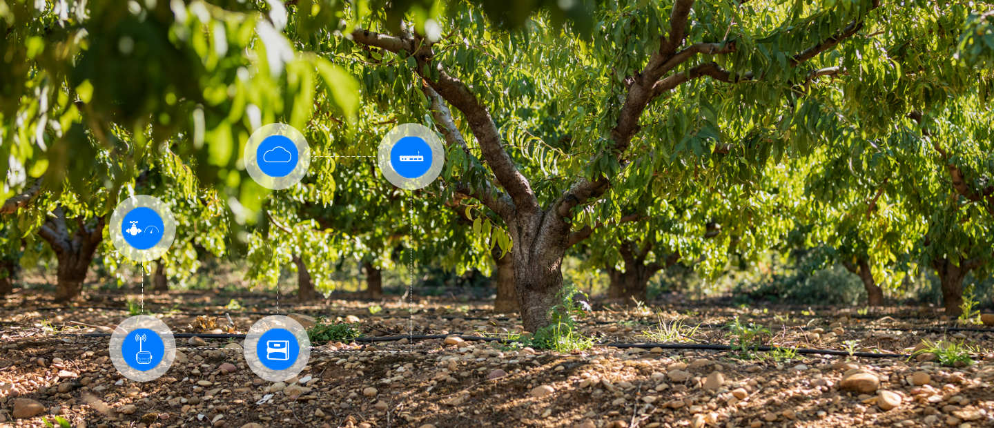 Enrich Your Orchards with Our Digital Solutions