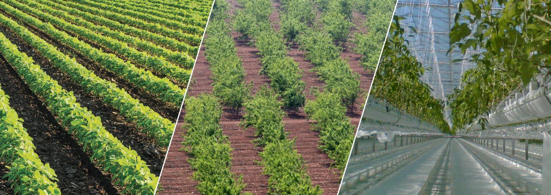 Netafim Irrigation